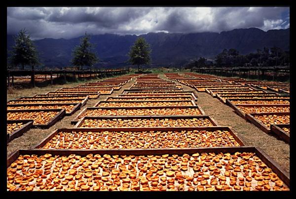 peaches by scottingham