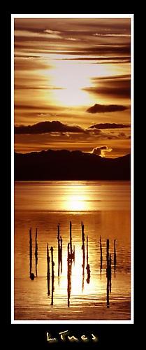 Golden Sun by ddunn