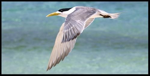 seabird ...in flight by mariner
