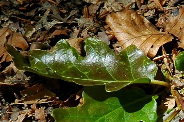 Leaf by a11sus