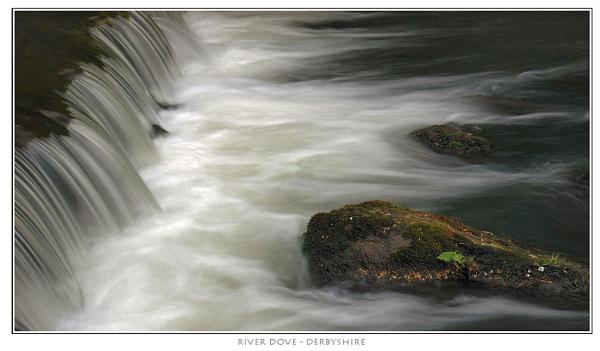 River Dove by markthompson