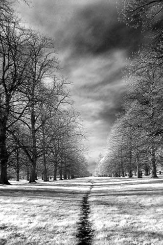 Chestnut Avenue by itsasetamendi