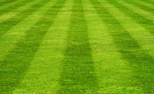 Lawn Lines by ejtumman