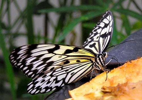 Butterfly by 54 luca