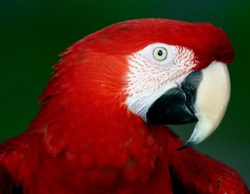Pretty Polly by Baz Hilder
