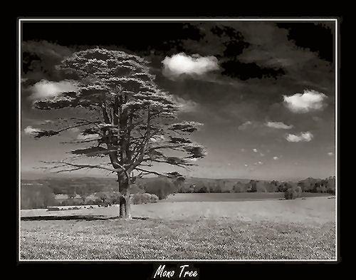 Mono Tree by Kris_Dutson