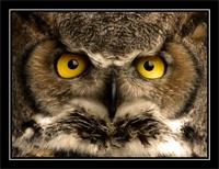 Look into my eyes! by Beardy