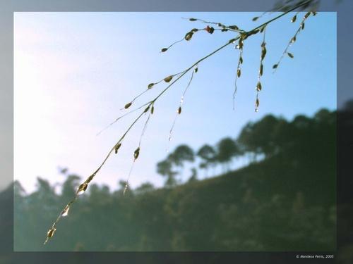 Rise with sun ! by Nandana