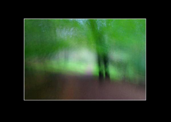 woodland by scottingham