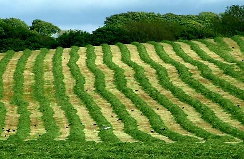 Farmer\'s Lines by TeresaH