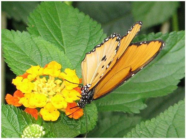 butterfly? by OLDNIK