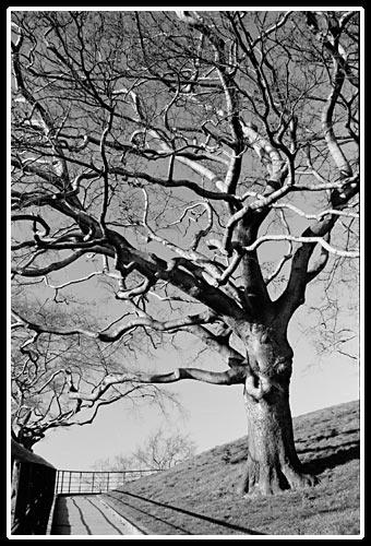 Tree by RSaraiva