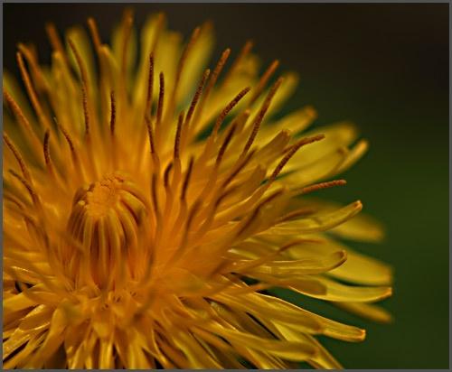 Weeds? by flossie