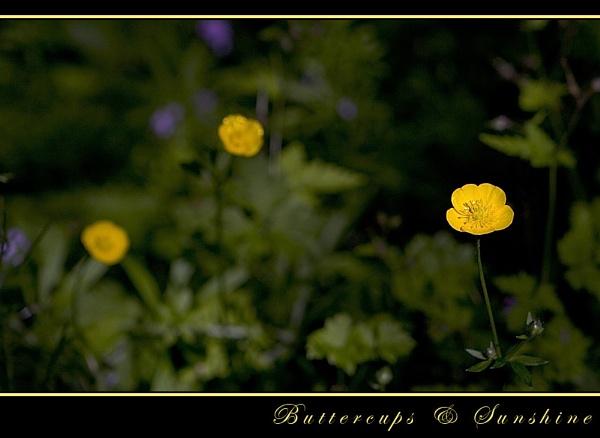 Buttercups & Sunshine by AdrianTurner