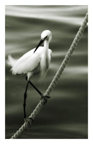 bird on rope by mwatkins9801