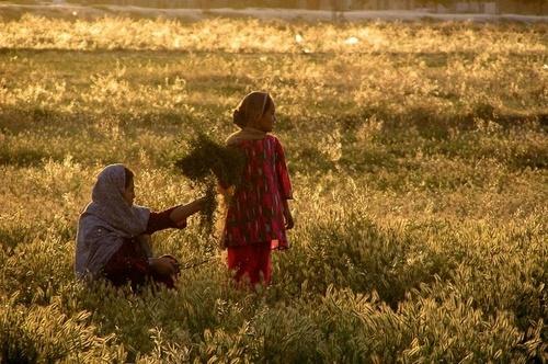 In the Golden farm by Aazragi