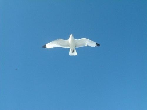 Sea Gull by beavis