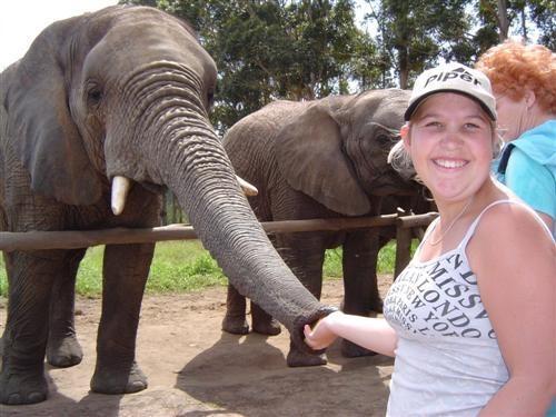 Hungry Elephant by keppy