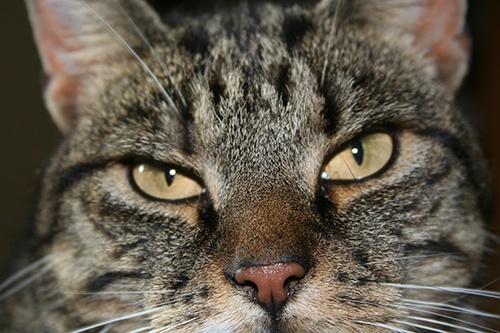 Tetchy mood cat by thearmsofvenusdemilo