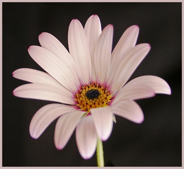 Open Flower by markharrop