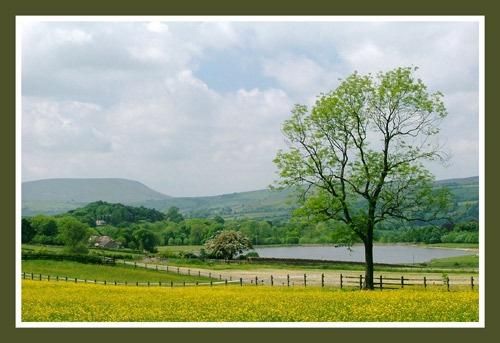Summer Landscape by br