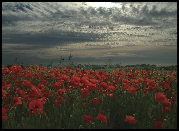 Field of Joy by vfr400