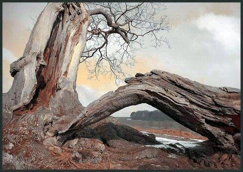 Bradgate Tree by TelStar