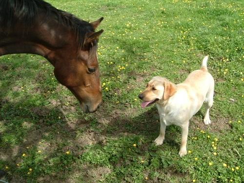 Horse V\'s Dog by beavis