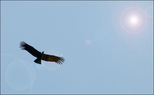 Flight of the Condor by rrruss