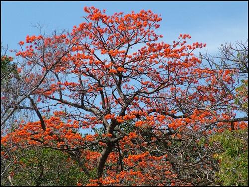 Orange Blossom by rrruss