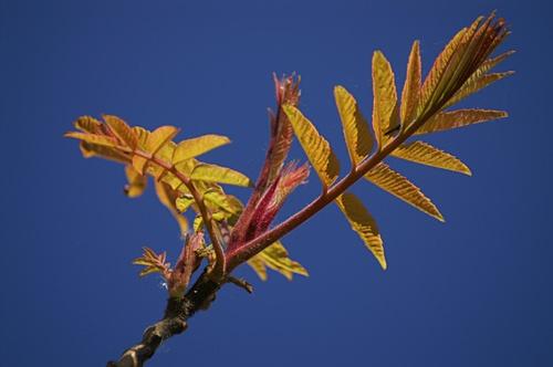 Leaves by RSaraiva
