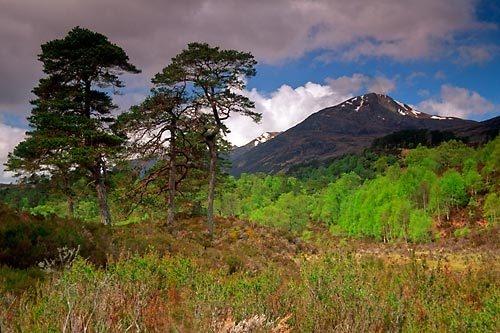Glen Affric by neptune