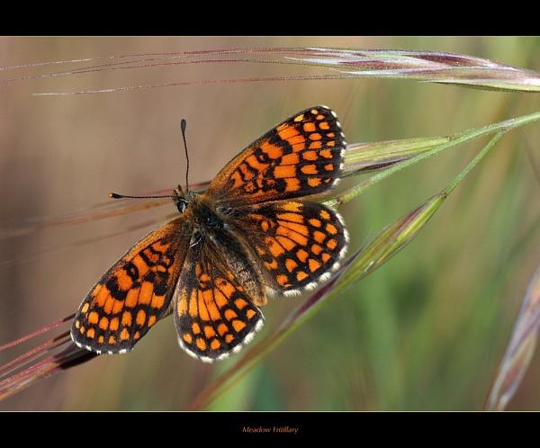 Meadow Orange by celestun