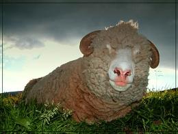 R U pulling the wool over my eyes..