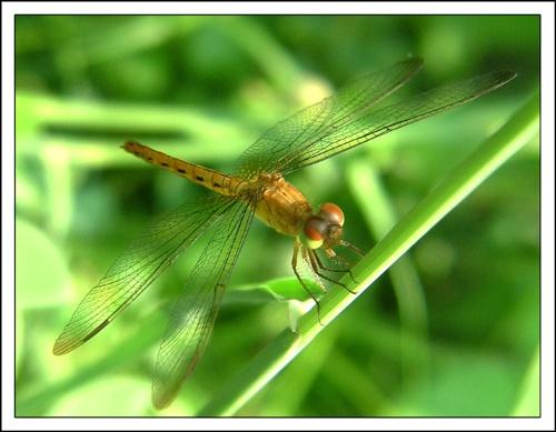 Wingspan by sasam