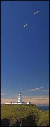 Strumbling Gulls by AdrianTurner