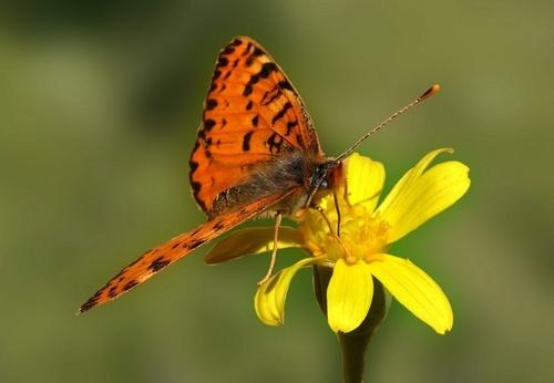 Butterfly # II by Aazragi