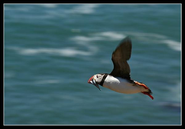 Flying fish by MartinjD