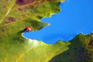 Ladybird raft by ArtemusDom