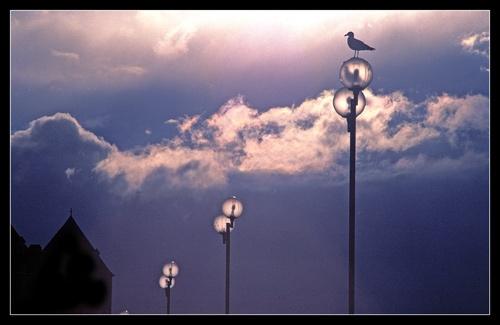 6 Lights by stevenb