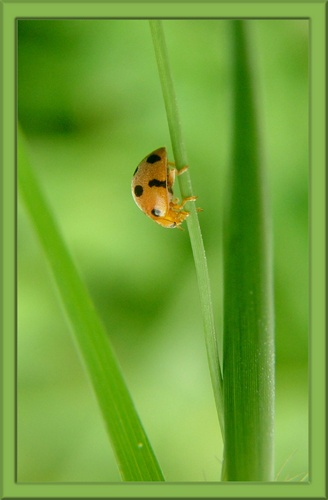 Lady In The Grass by sasam
