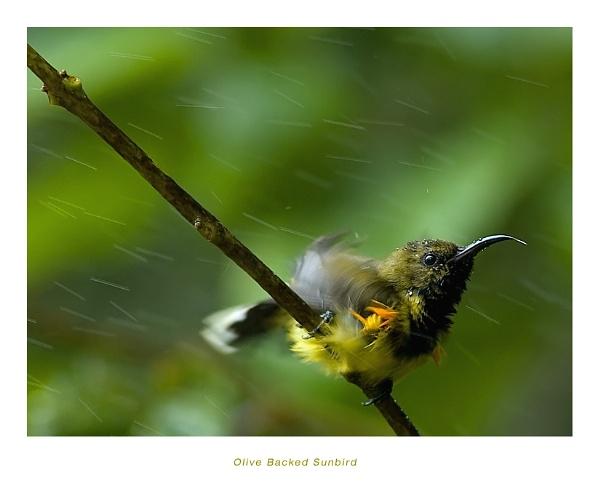 Sunbird by suleesia