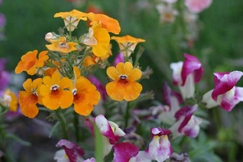 flowers by saramalik