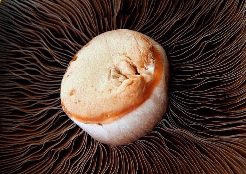 Mushroom by AngelaD