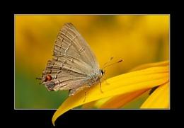 Butterfly Springboard
