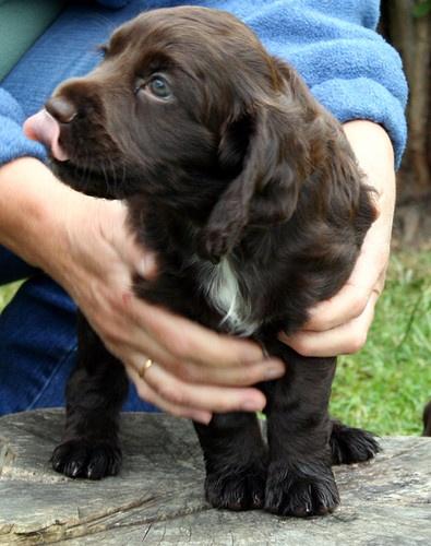 new puppy by petegaylard