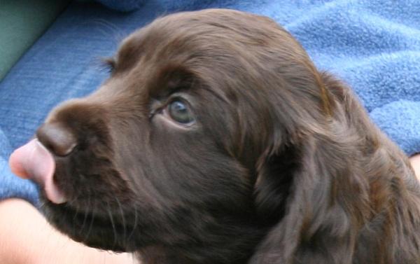 puppy 2 by petegaylard
