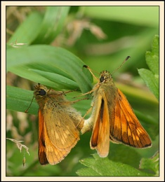 'Sexy Skippers'