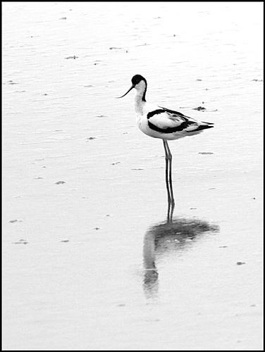 Solitude by Dennis.Alden