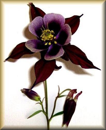 Purple Velvet by AngelaB